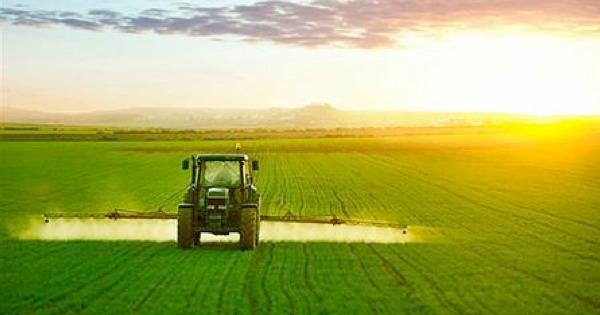 Agricoltura terapeutica: riscoprire il valore della terra come strumento di inclusione sociale. Duei bandi della Regione Sicilia. Domande entro il 30 ottobre