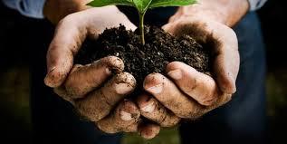 """Nasce in Sicilia la """"Banca della Terra"""". La Regione affiderà ai giovani agricoltori in concessione 430 ettari di terreni agricoli, in comodato ventennale rinnovabile. Musumeci:"""" Permettere agli aspiranti agricoli di fare impresa e di valorizzare vasti terreni demaniali"""""""