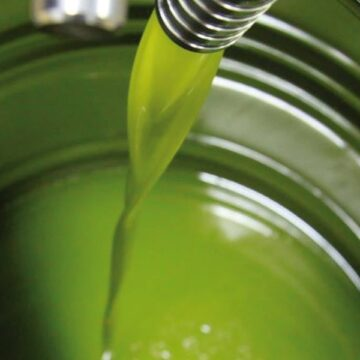 E' tempo di raccolta delle olive!