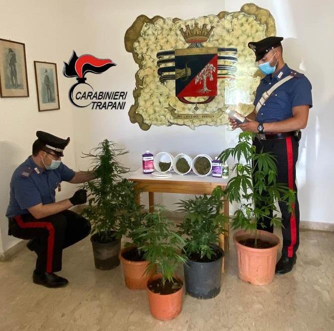 Petrosino. Pollice verde, ma per la coltivazione di cannabis: arrestato dai Carabinieri